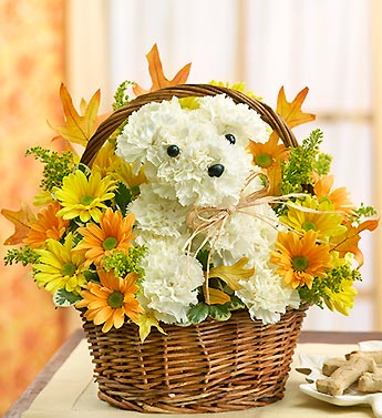 The Village Greenery Florist – a-DOG-able for Fall